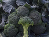 Broccoli Gemini IMG_4800