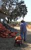 IMG_5766PeteAndHisPumpkinWagon