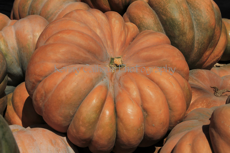 IMG_4999Fairytale_Pumpkin