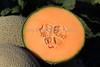 Melon Ready For Harvest 2