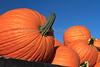 IMG_7765_Pumpkins