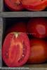 P Tomatoes_N5A9059