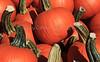 IMG_6546_Pumpkins_Perrys