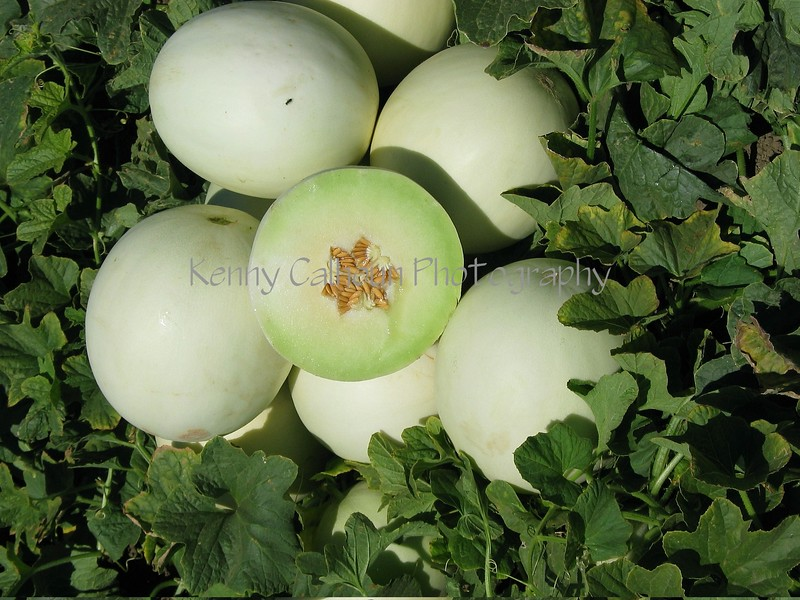 Honeydew Green Flesh Melons 2