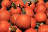 IMG_5080Pumpkin_Harvest