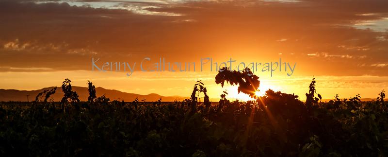 Cardella Winery_N5A7724-Edit