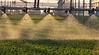 Winters Watering_N5A1492-Edit-Edit