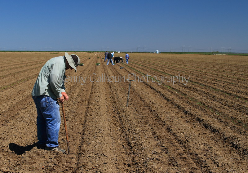 Luke Planting a Harvest Trial