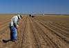 Luke Planting a Harvest Trial