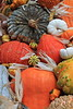 Pumpkins, Gourds, Squash, Indian Corn 3