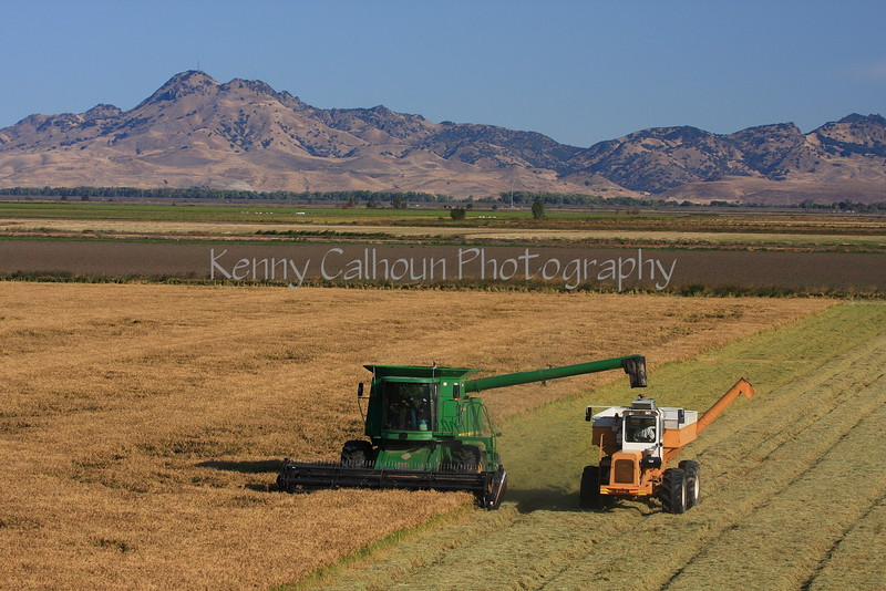 Rice Harvest and the Buttes 2