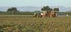 2019 PT Harvesters-6194