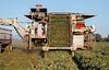 2019 PT Harvesters-6506