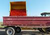 GT Cart-5375