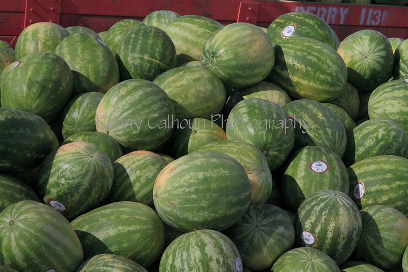 IMG_2936Warermelon_Harvest