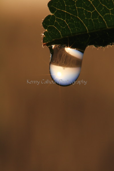 Morning Dew Drop