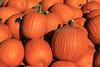 IMG_7807_Pumpkins