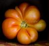 Heirloom Tomatoes Back Yard_N5A8314