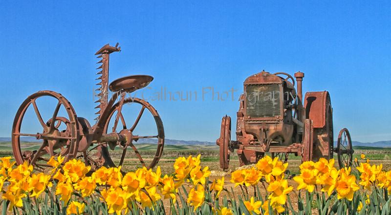 2875ColorEfexOld Tractors andDaffodils