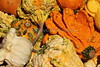 Pumpkins and Gourds 2