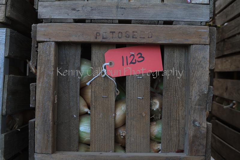 Seminis_Onions_WoodlandAugust_15,_2012IMG_7593untitled-2