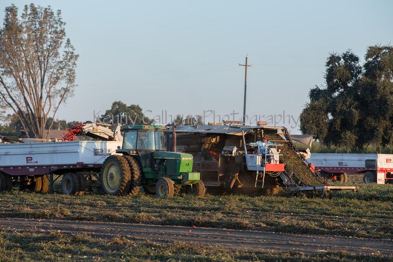2019 PT Harvesters-6203