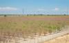 CA Drought_N5A9079