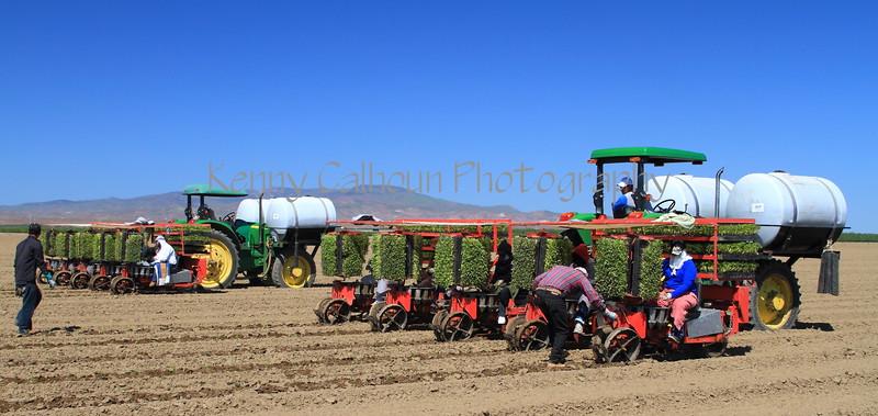 Processing Tomato Transplanters Huron