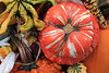 Pumpkins, Gourds, Squash, Indian Corn 5