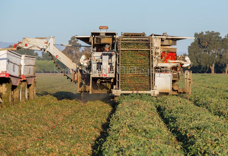 2019 PT Harvesters-6481