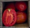P Tomatoes_N5A9057