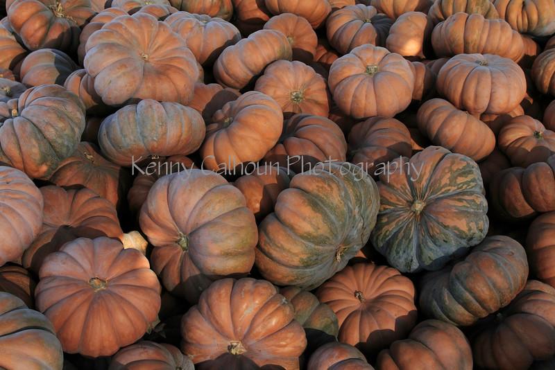 IMG_4899Fairytale_Pumpkin