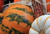 Pumpkins, Gourds, Squash, Indian Corn 6