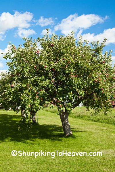 Apple Tree, Dane County, Wisconsin