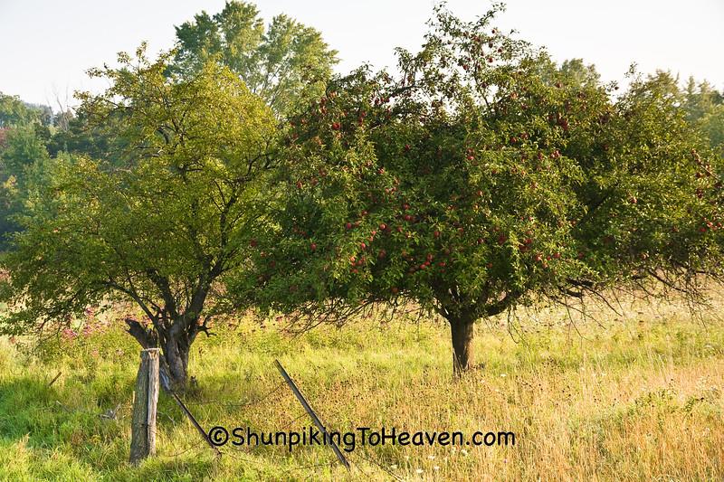 Apple Trees, Sauk County, Wisconsin