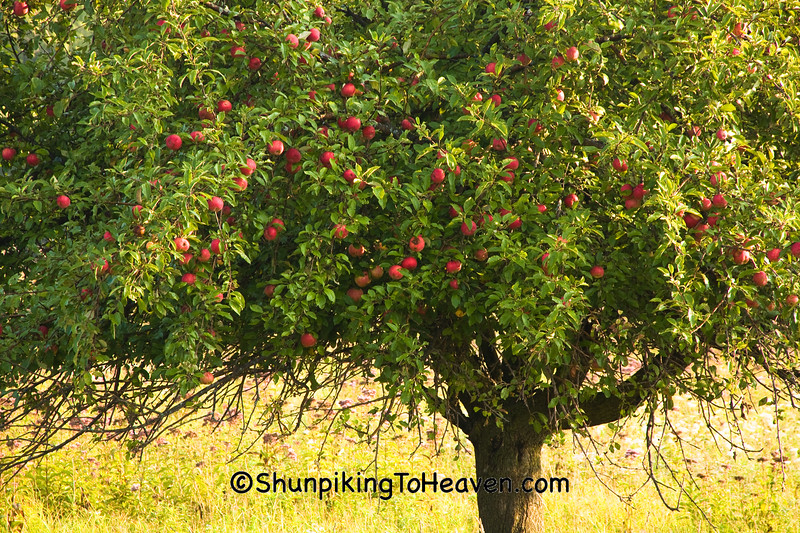 Apple Tree, Sauk County, Wisconsin