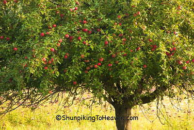 Apple Tree, Sauk County, Wisconsin