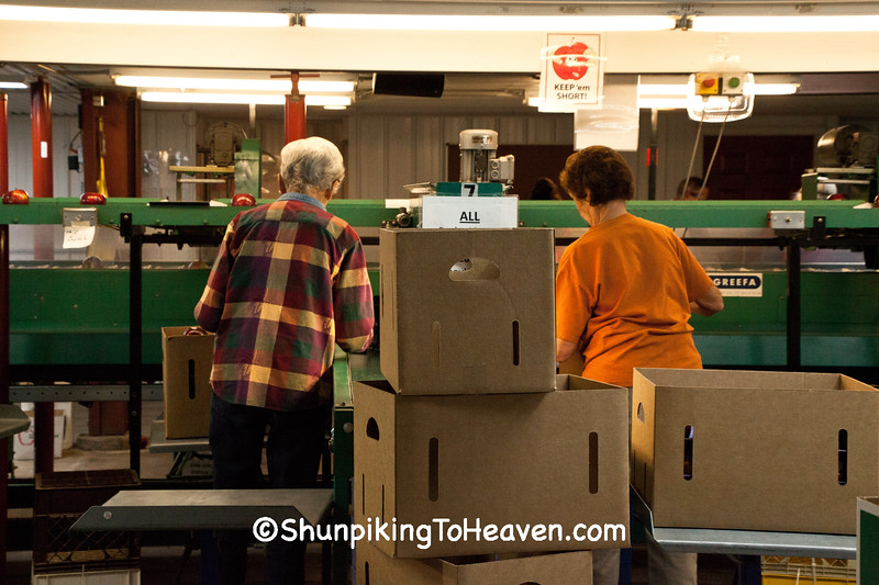 Apple Processing, Sunrise Orchards, Crawford County, Wisconsin