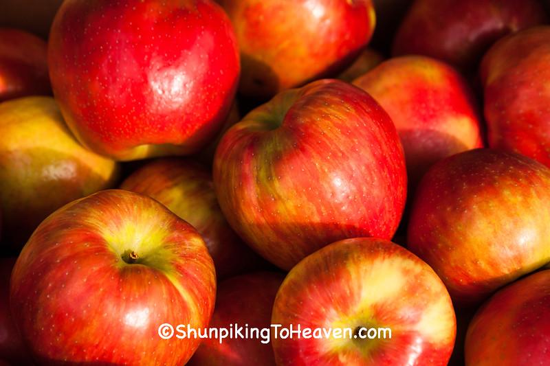 Honeycrisp Apples, Crawford County, Wisconsin