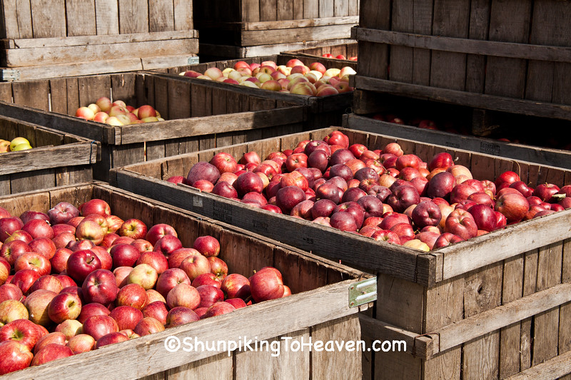 Crates of Apples, West Ridge Orchard, Crawford County, Wisconsin
