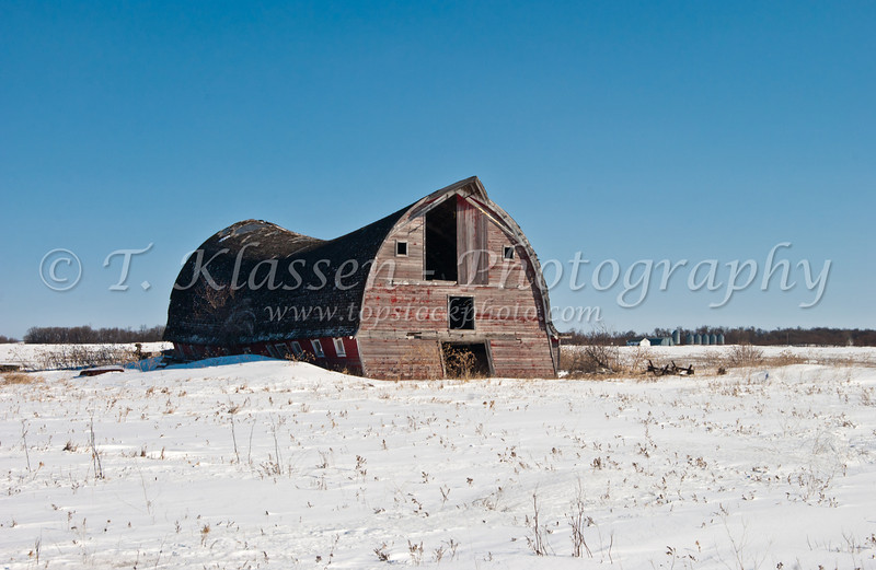 An old barn with a broken back in winter near St. Agathe, Manitoba, Canada.