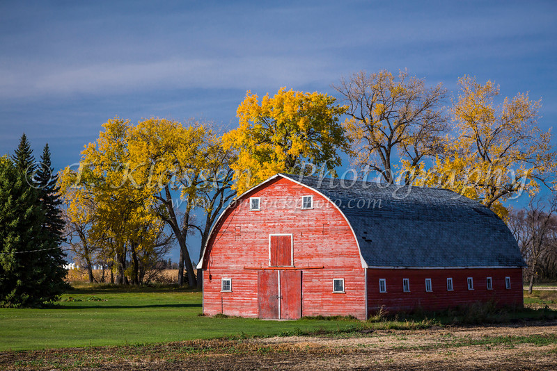 A red barn with fall foliage color near Myrtle, Manitoba, Canada.