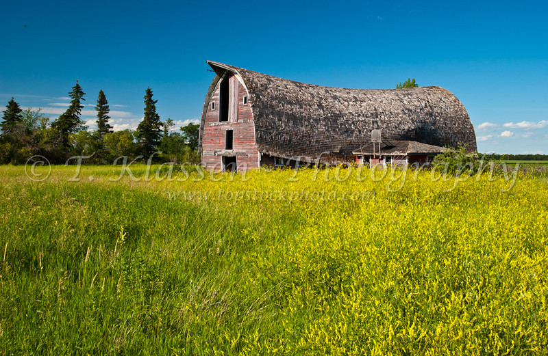 An old barn with a broken back near St. Agathe, Manitoba, Canada.