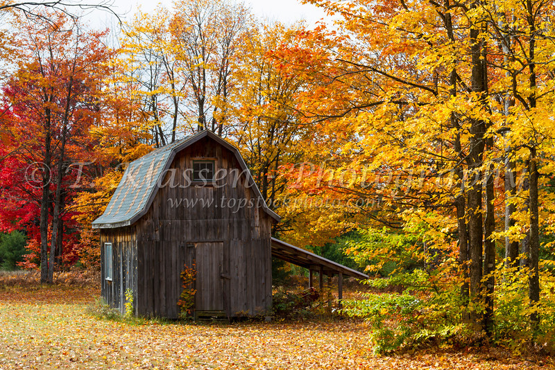 A small farm barn with fall foliage color in the forest near Paulding, Michigan, USA.