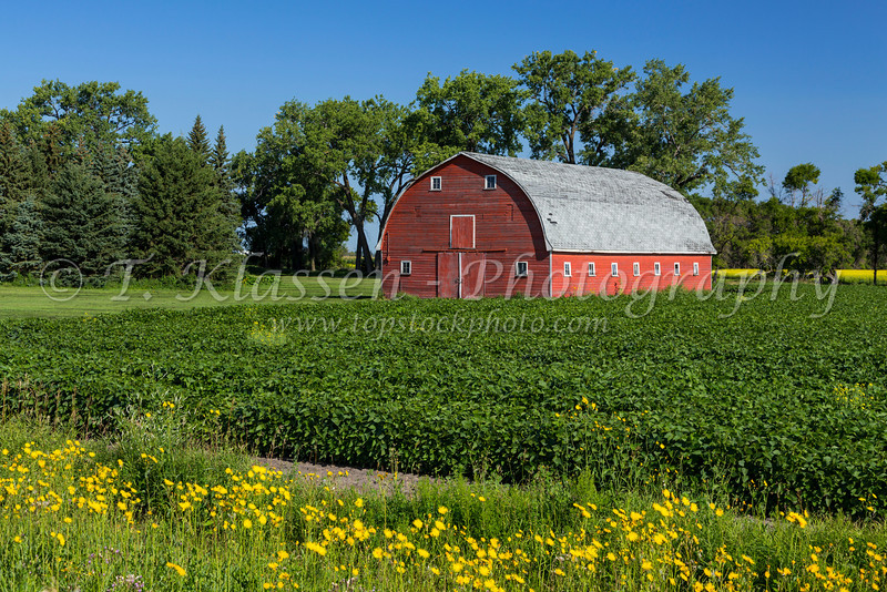 A red barn in the countryside near Myrtle, Manitoba, Canada.