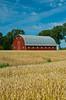 A red barn and ripe wheat field near Roland, Manitoba, Canada.