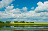 Yellow canola field with farm buildings and pond near Morden, Manitoba, Canada.