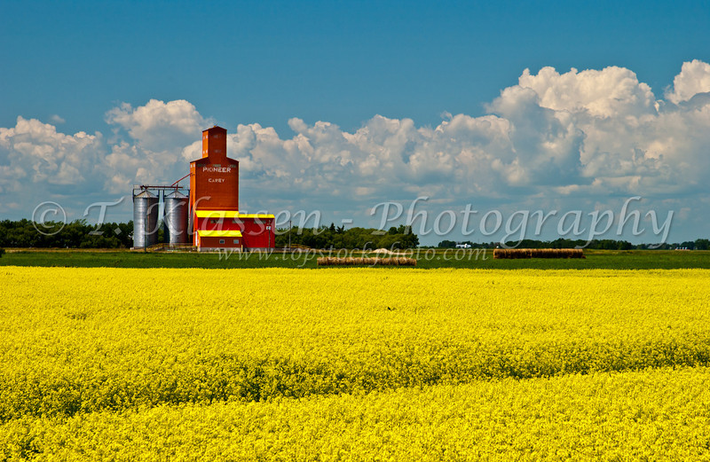 A Pioneer grain elevator with blooming canola field at Carey, Manitoba, Canada.