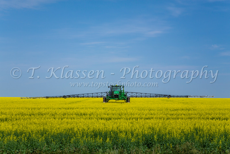 A chemical sprayer on a yellow canola field near St. Leon, Manitoba, Canada.
