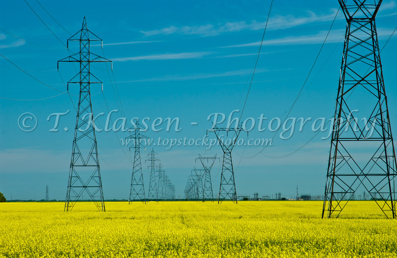 Hydro electric power lines with yellow canola field in rural, Manitoba, Canada.